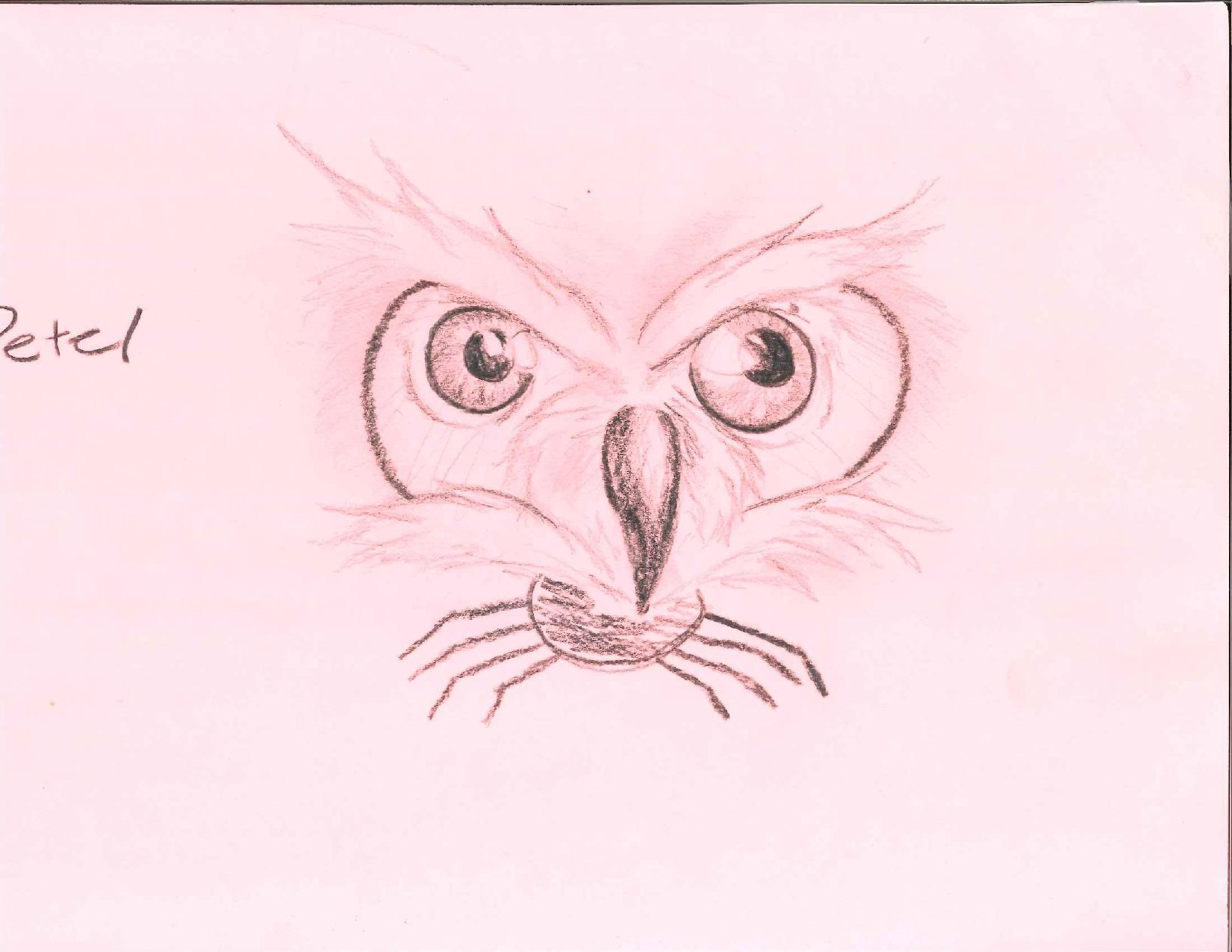 Owl and Spider